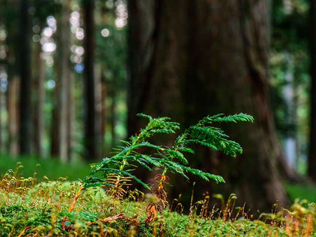 08_09_18_forest