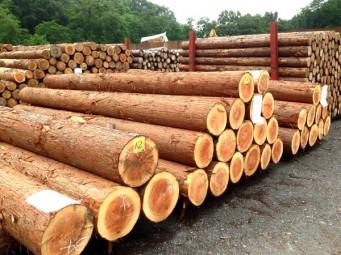 秩父広域森林組合木材センター 共販情報(第233回~)