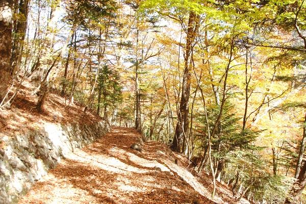 東京大学秩父演習林「しおじの会と東大秩父演習林を歩こう」